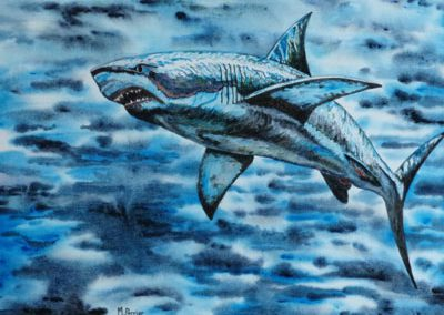Grand requin blanc